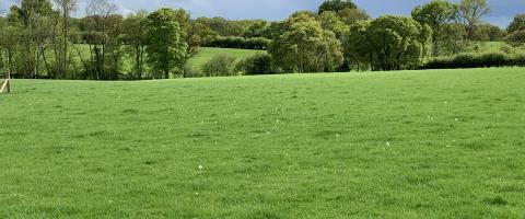 Kings Oak Farm